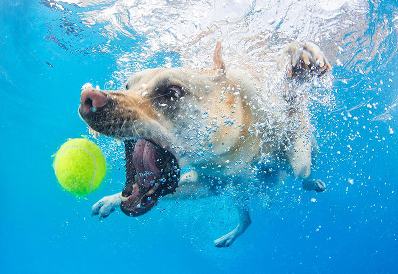 Fotos de cães buscando bolas debaixo d'água (9)