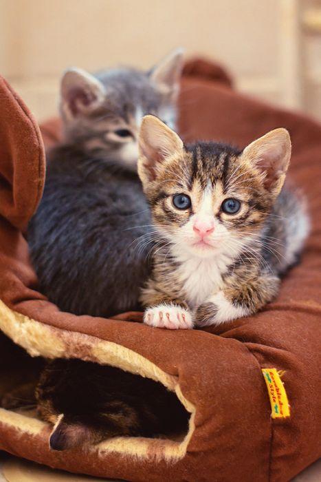 Gatinhos abandonados se recuperam (10)