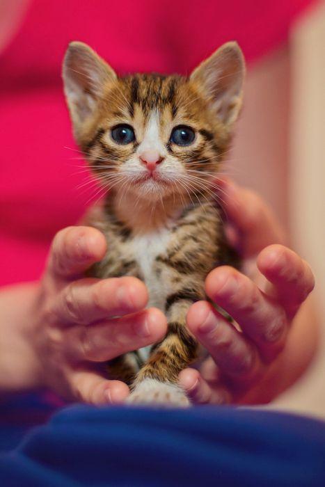 Gatinhos abandonados se recuperam (12)