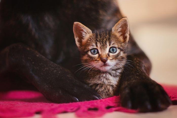 Gatinhos abandonados se recuperam (6)