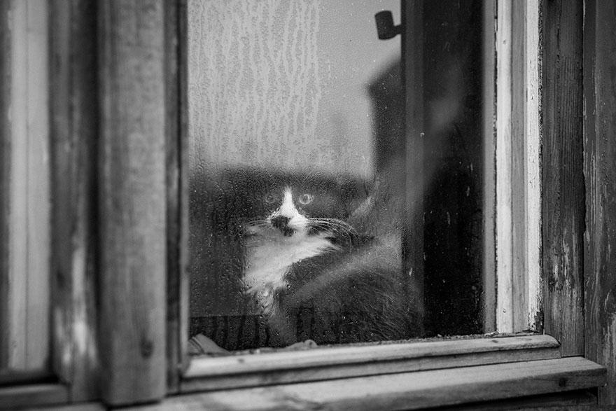 Gatos melancólicos à espera de seus donos (1)
