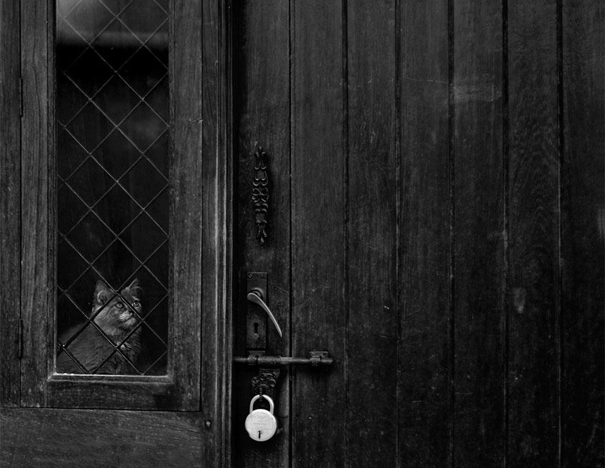 Gatos melancólicos à espera de seus donos (10)