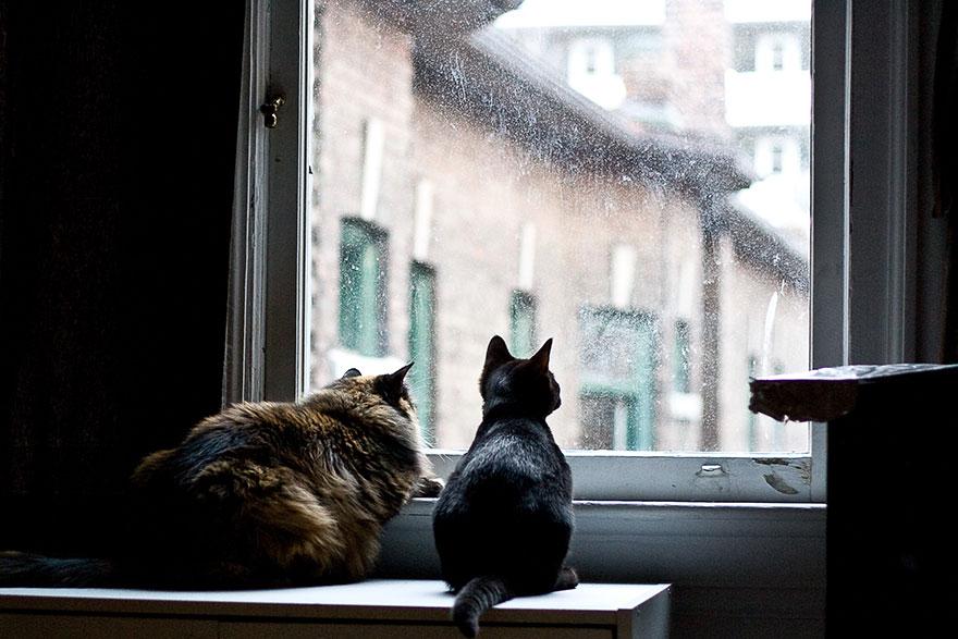 Gatos melancólicos à espera de seus donos (11)