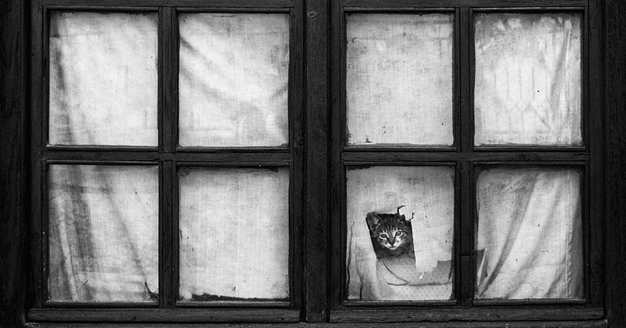 Gatos melancólicos à espera de seus donos (12)