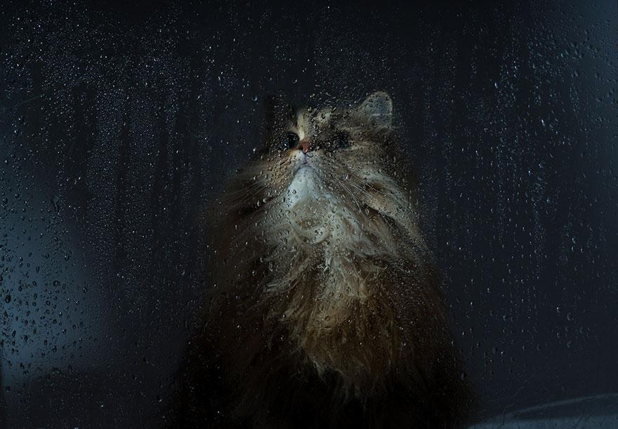 Gatos melancólicos à espera de seus donos (13)