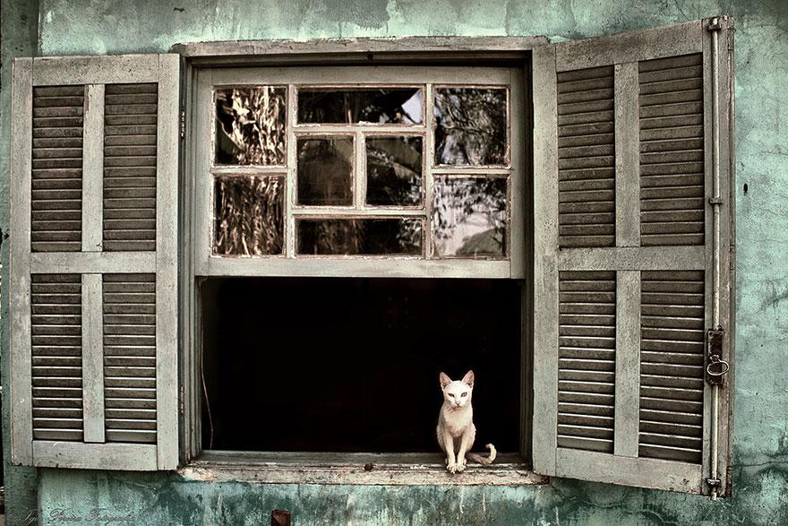 Gatos melancólicos à espera de seus donos (14)