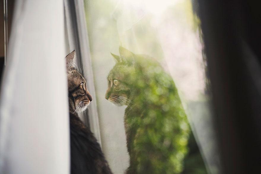 Gatos melancólicos à espera de seus donos (18)
