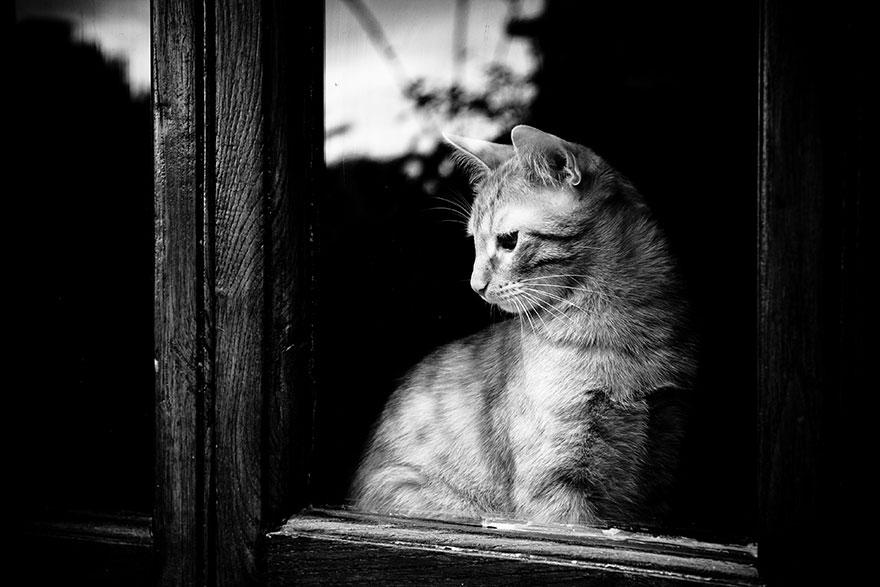 Gatos melancólicos à espera de seus donos (19)