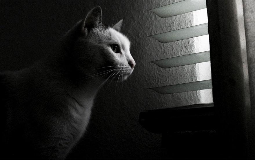 Gatos melancólicos à espera de seus donos (2)
