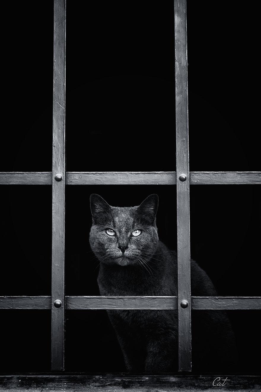 Gatos melancólicos à espera de seus donos (20)