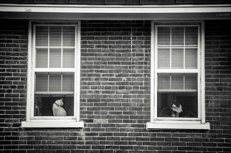 Gatos melancólicos à espera de seus donos (21)