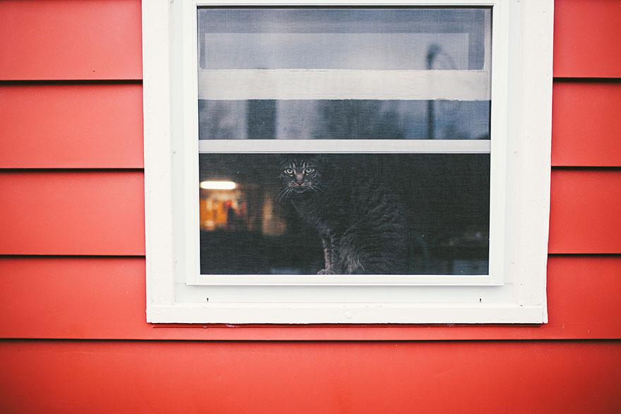 Gatos melancólicos à espera de seus donos (22)