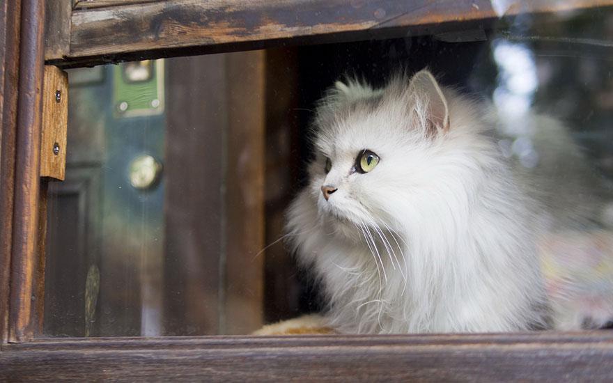 Gatos melancólicos à espera de seus donos (24)