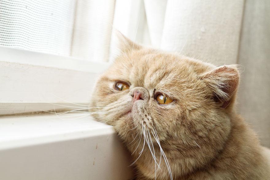Gatos melancólicos à espera de seus donos (26)