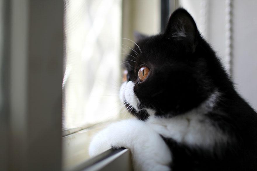 Gatos melancólicos à espera de seus donos (27)
