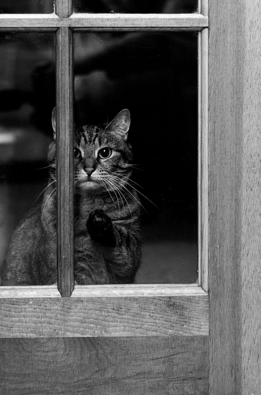 Gatos melancólicos à espera de seus donos (28)