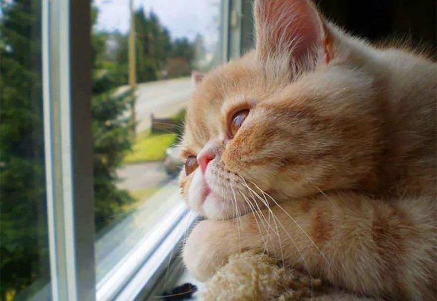 Gatos melancólicos à espera de seus donos (29)