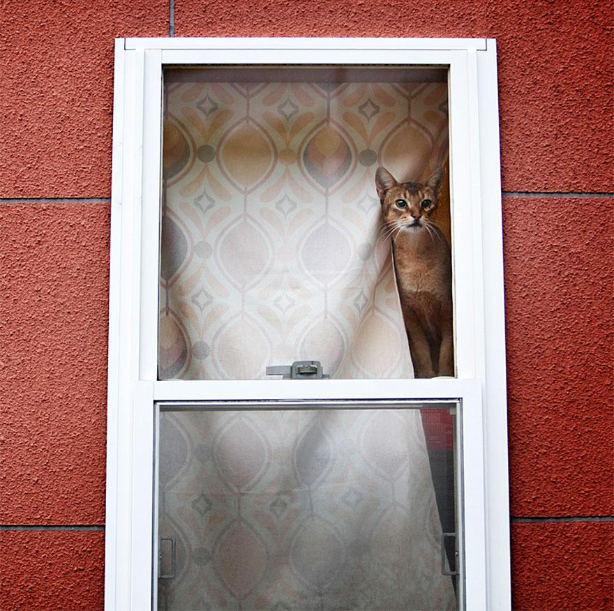 Gatos melancólicos à espera de seus donos (3)