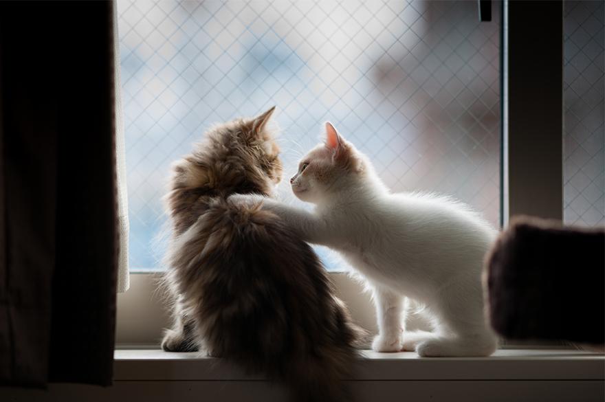 Gatos melancólicos à espera de seus donos (30)