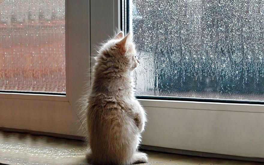 Gatos melancólicos à espera de seus donos (31)