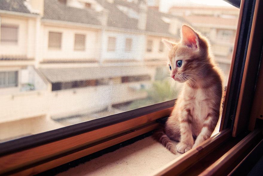 Gatos melancólicos à espera de seus donos (4)