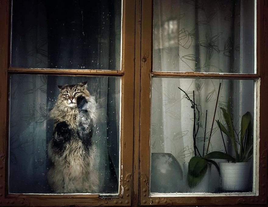 Gatos melancólicos à espera de seus donos (5)