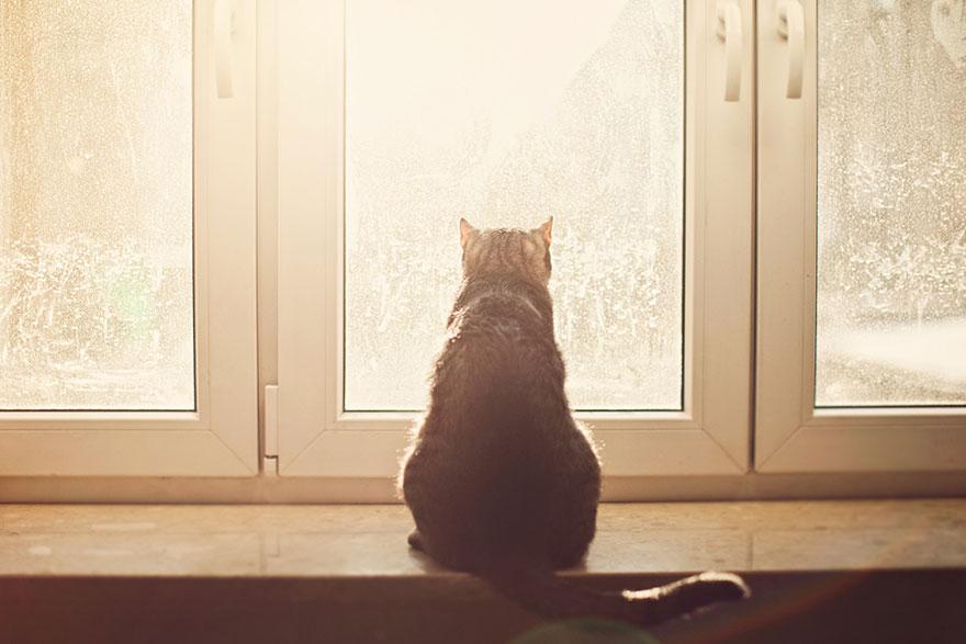 Gatos melancólicos à espera de seus donos (6)