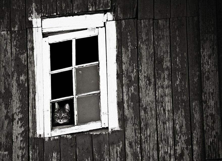 Gatos melancólicos à espera de seus donos (7)