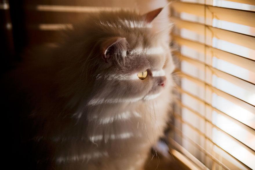 Gatos melancólicos à espera de seus donos (8)