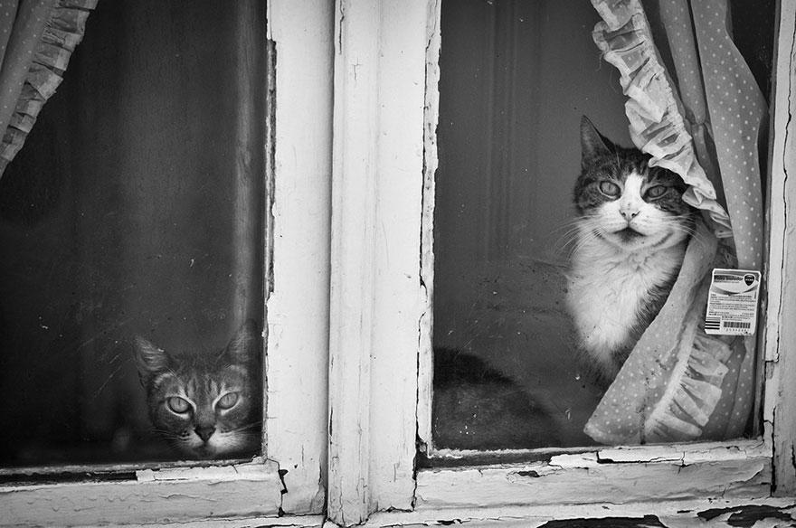 Gatos melancólicos à espera de seus donos (9)