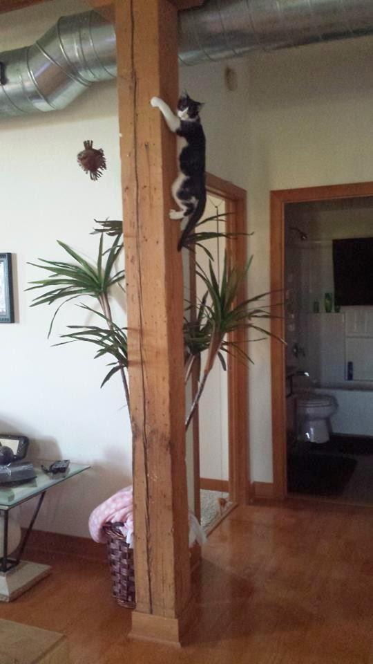 Gatos-que-pensão-que-são-outros-animais-Blog-Animal (1)