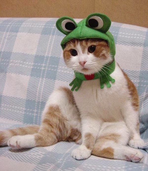 Gatos-que-pensão-que-são-outros-animais-Blog-Animal (10)