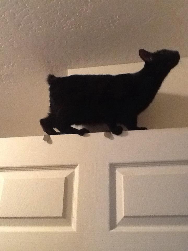 Gatos-que-pensão-que-são-outros-animais-Blog-Animal (11)