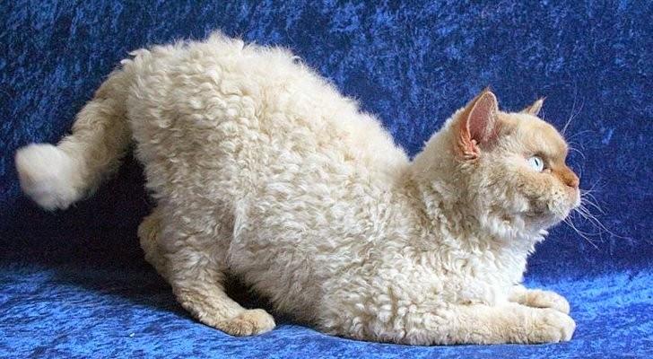 Gatos-que-pensão-que-são-outros-animais-Blog-Animal (12)