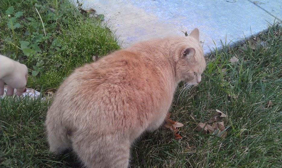 Gatos-que-pensão-que-são-outros-animais-Blog-Animal (13)