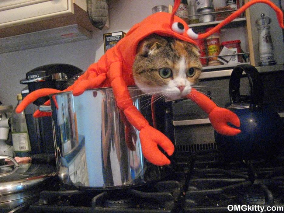 Gatos-que-pensão-que-são-outros-animais-Blog-Animal (14)