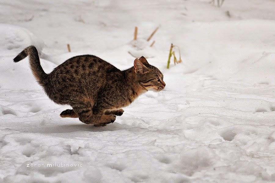 Gatos-que-pensão-que-são-outros-animais-Blog-Animal (15)