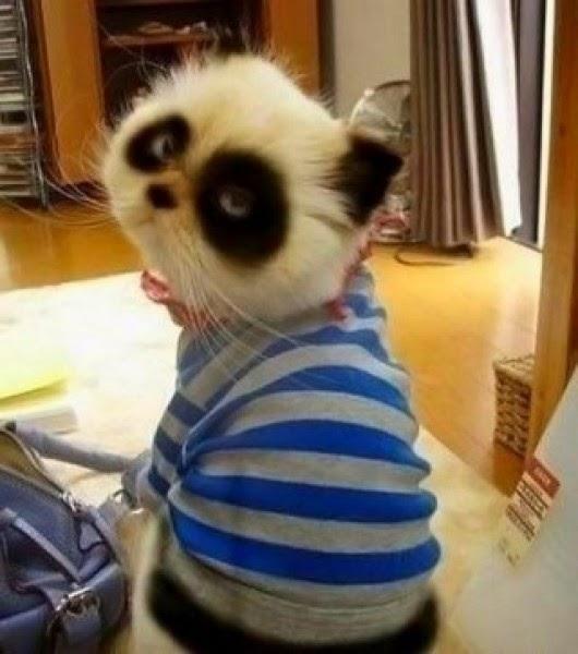 Gatos-que-pensão-que-são-outros-animais-Blog-Animal (16)