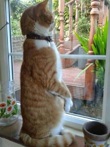 Gatos-que-pensão-que-são-outros-animais-Blog-Animal (17)