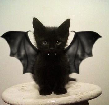 Gatos-que-pensão-que-são-outros-animais-Blog-Animal (18)