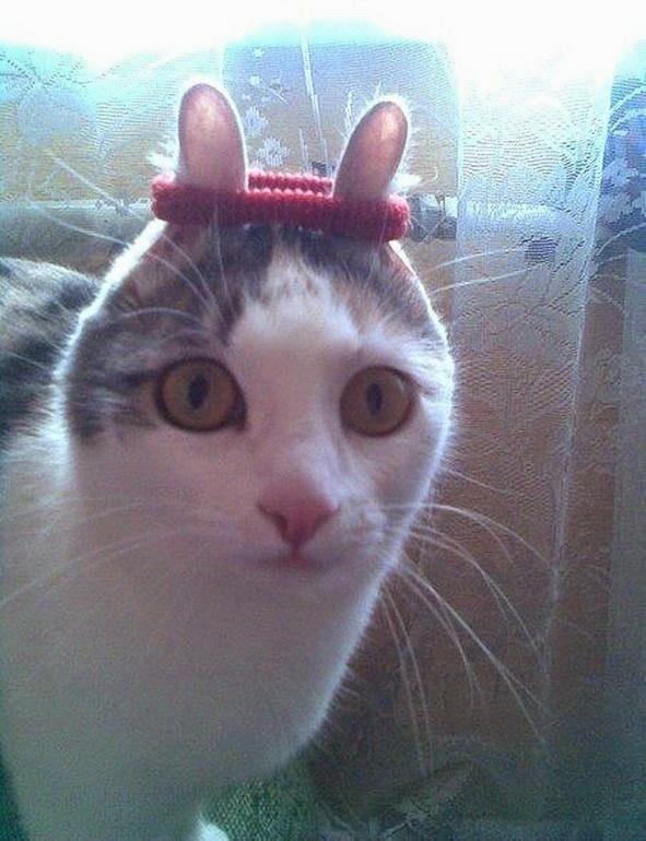 Gatos-que-pensão-que-são-outros-animais-Blog-Animal (2)