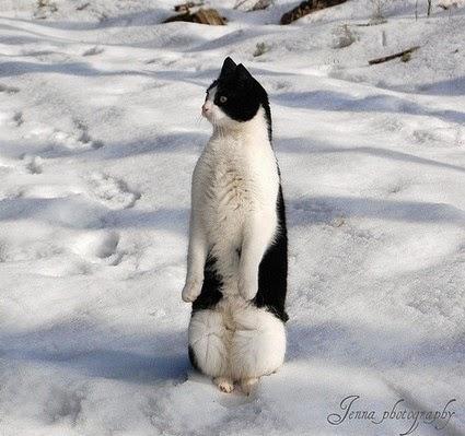 Gatos-que-pensão-que-são-outros-animais-Blog-Animal (3)