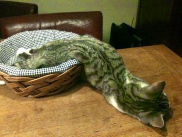 Gatos-que-pensão-que-são-outros-animais-Blog-Animal (4)