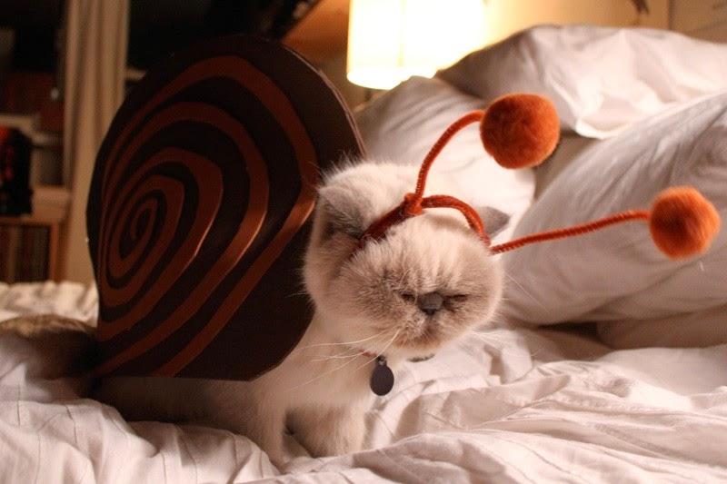 Gatos-que-pensão-que-são-outros-animais-Blog-Animal (5)