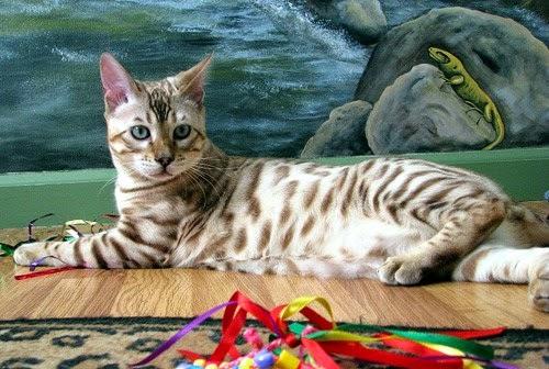 Gatos-que-pensão-que-são-outros-animais-Blog-Animal (6)