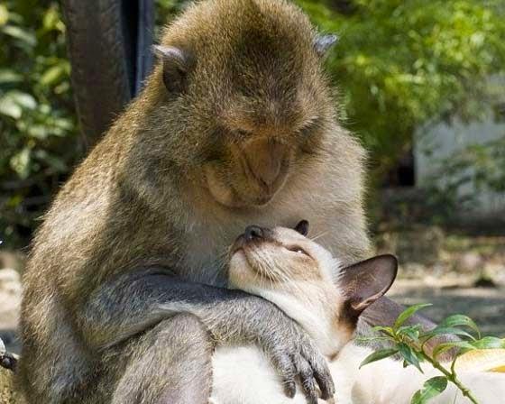 Gatos-que-pensão-que-são-outros-animais-Blog-Animal (7)