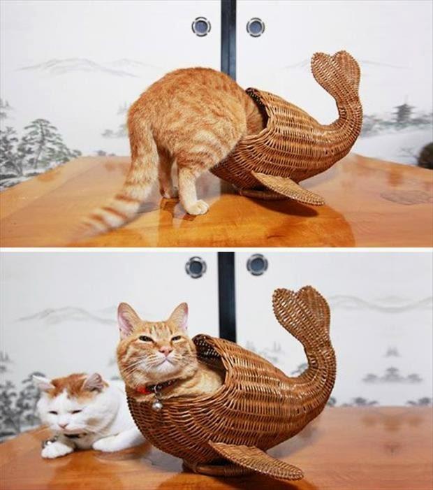 Gatos-que-pensão-que-são-outros-animais-Blog-Animal (9)