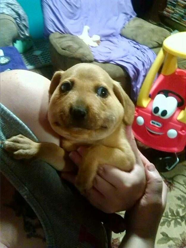 O que acontece quando cachorros comem abelhas