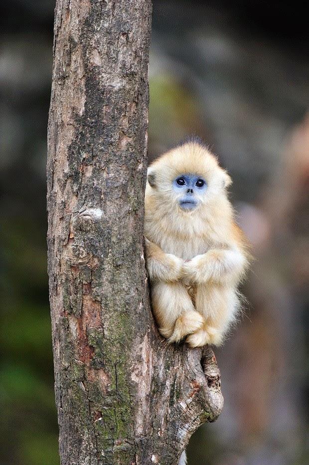 Os-macaquinhos-mais-fofos-e-adoráveis-do-mundo (1)
