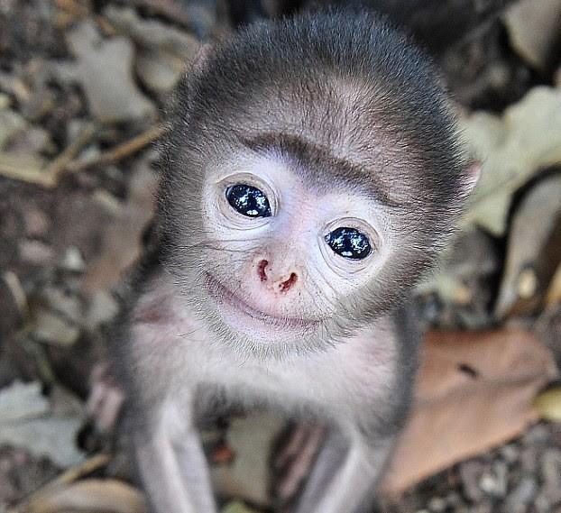 Os macaquinhos mais fofos e adoráveis do mundo